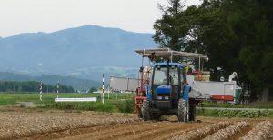馬鈴薯の収穫風景
